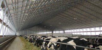 ферма корова